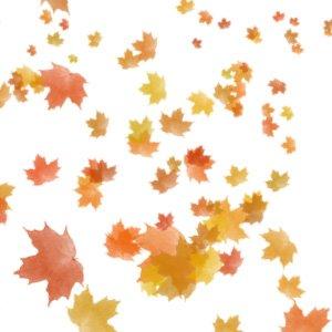 daun berguguran