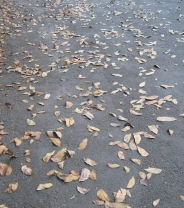 guguran daun
