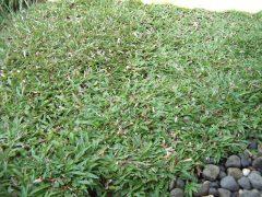 rumput di atas resapan air