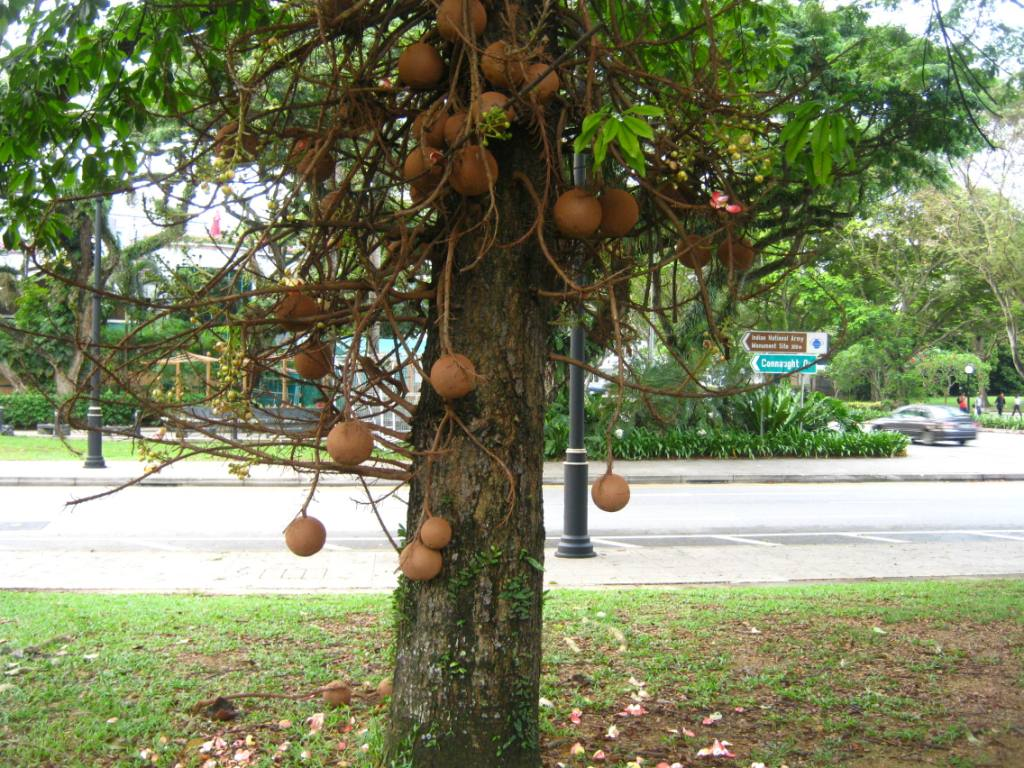 Galeri Gambar Pohon 5 Tangkai Sketsa