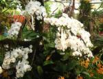 Royal Flora 2011