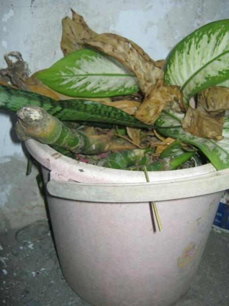 Ember retak jadi mini komposter
