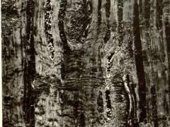 Penampang bujur batang Eriandra