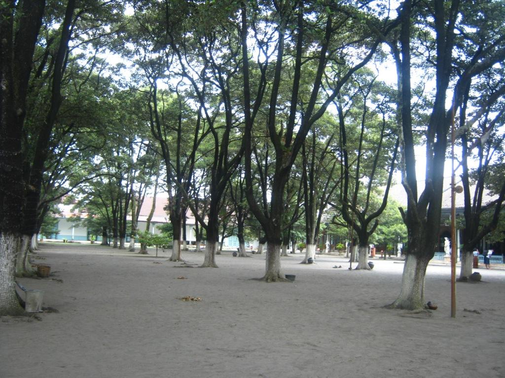 Pohon sawo kecik dan pasir gemersik