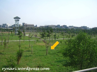 Penanaman pohon (ditopang) di taman hutan kota