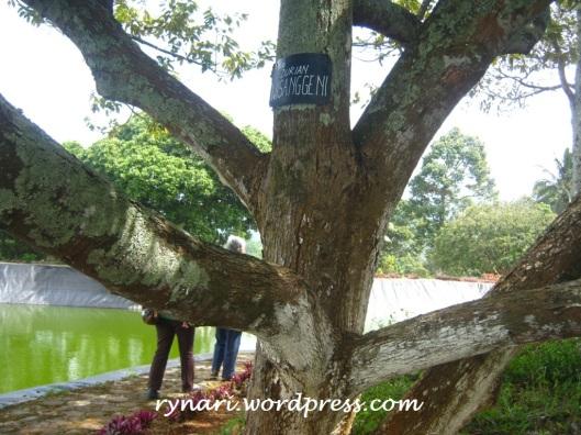 durian wisanggeni