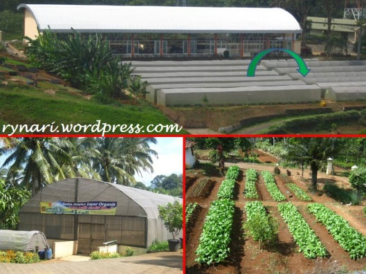 hamparan kebun sayuran