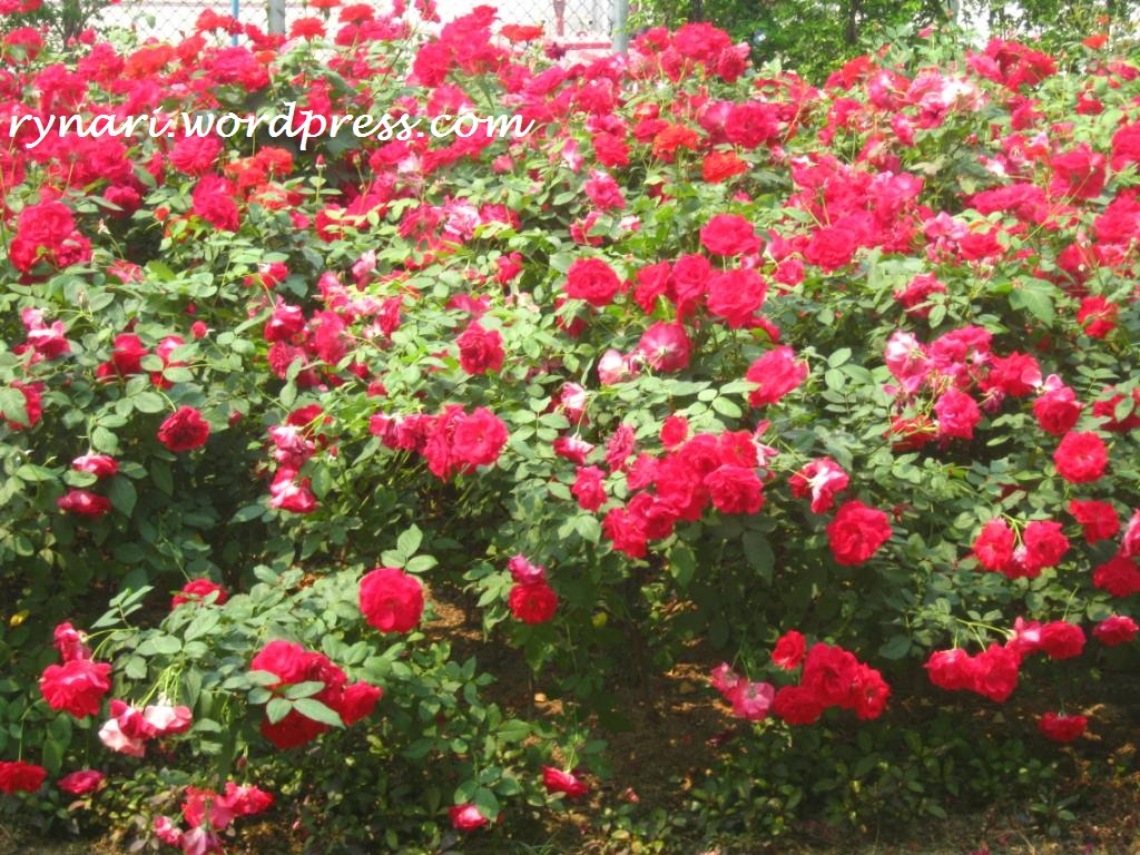 Pesona Mawar Utara  4c03694b02