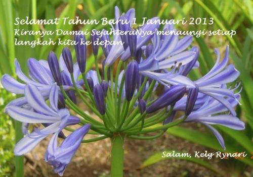 Bakung biru di Tahun Baru 2013