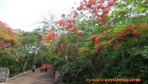 Pasukan oranye bertudung merah oranye
