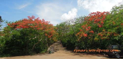 Tudung merah oranye penjaga gerbang