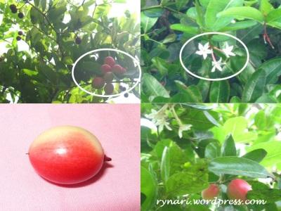 Sosok bunga dan buah
