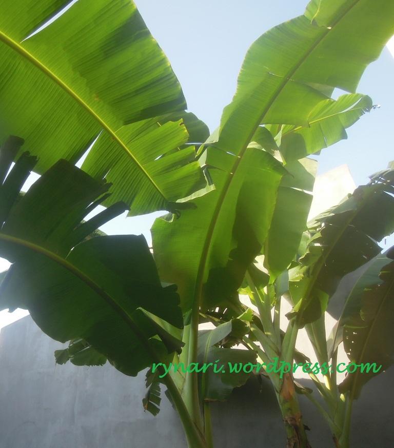 warna hijau daun pisang