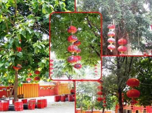 SPK-Merah di pohon jati, beringin, angsana dan pinus