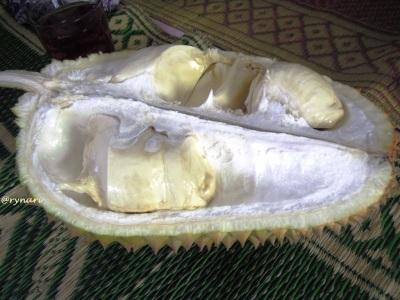 Durian Lokal Tegalamba-menggoda