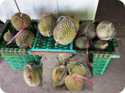 Durian Lokal Tegalamba