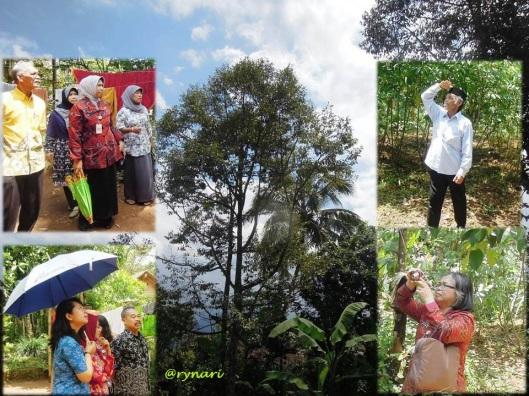 Kebun Durian-menengadah harap