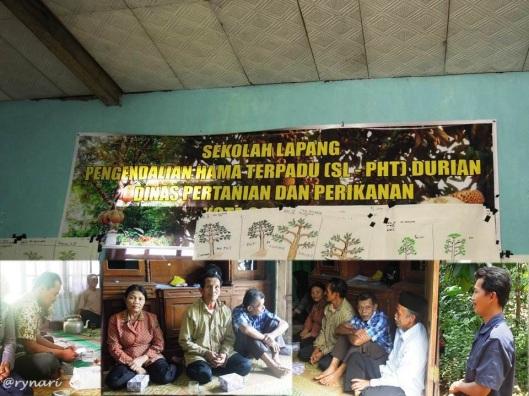 Pembelajar Sekolah Lapang Durian