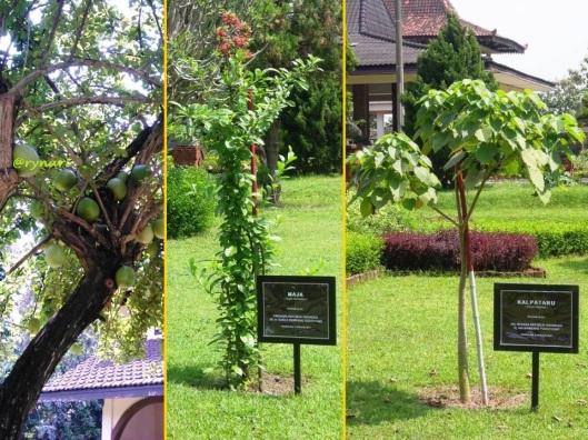 Pohon maja dan kalpataru di Museum Majapahit