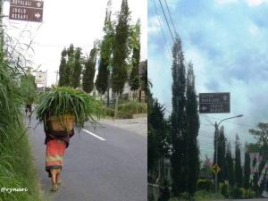1. Papan arah Joglo Merapi