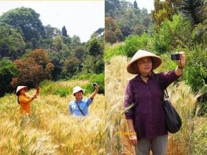Selfi di ladang gandum