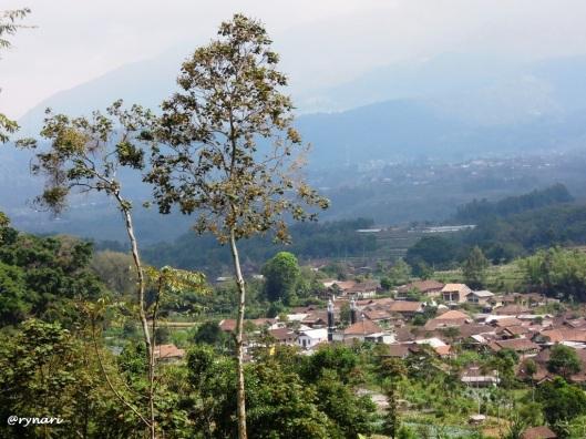 12. Dusun Dalangan dari pinggang Telomoyo