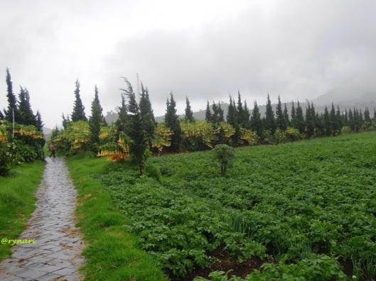 kentang menghampar di tepian telaga balekambang
