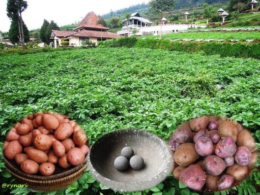 Kentang si peluru kemakmuran Di Hyang