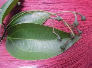 keningar (Cinnamomum verum)