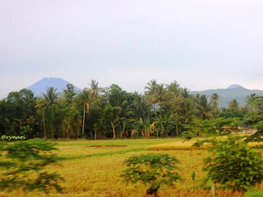 Merbabu (ki) - puncak Merapi mengintip (ka) dari JL Ambarawa