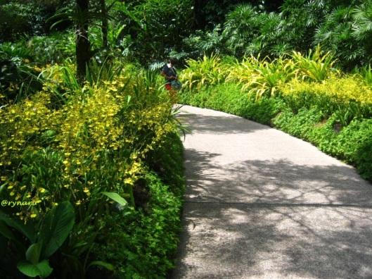 Orchid garden 3