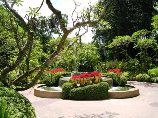 Orchid garden 6