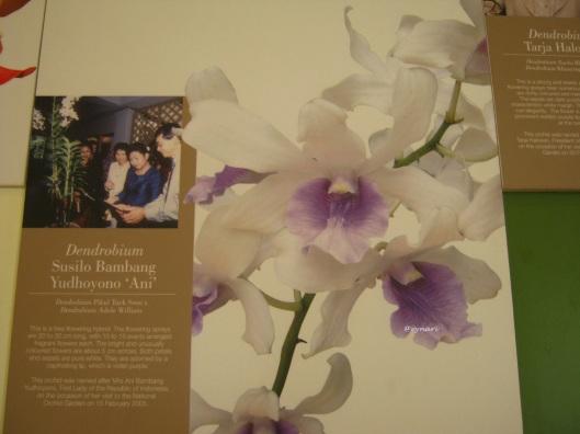 Orchid garden-koleksi khusus 1