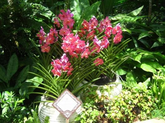 Orchid garden -koleksi khusus 2