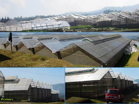 Amazing Farm 3 - pabrik tanaman