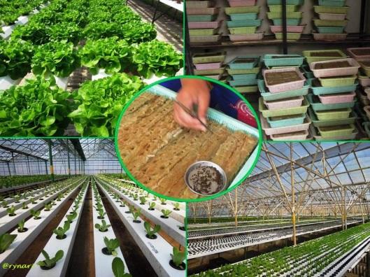 Amazing Farm 4-ban berjalan industri sayur