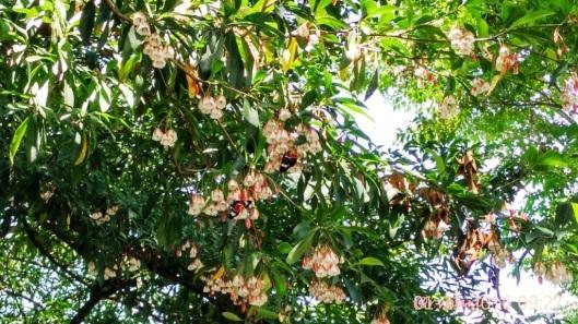 Rejasa flora identitas Salatiga payung Selasar Kartini