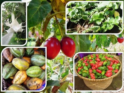 5 Flora Istimewa Dieng