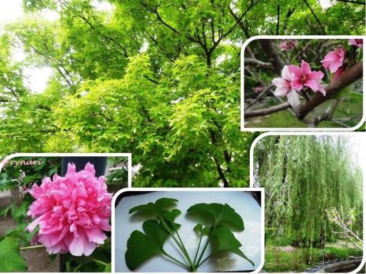 5 Flora memukau Tirai Bambu