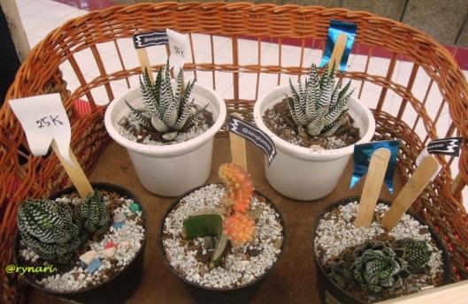 Kaktus Pot