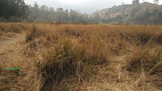 Wlingi, masai berlatar gundul