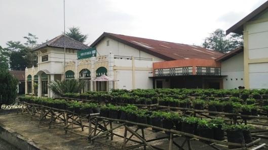 Pabrik Kopi Banaran-stroberi