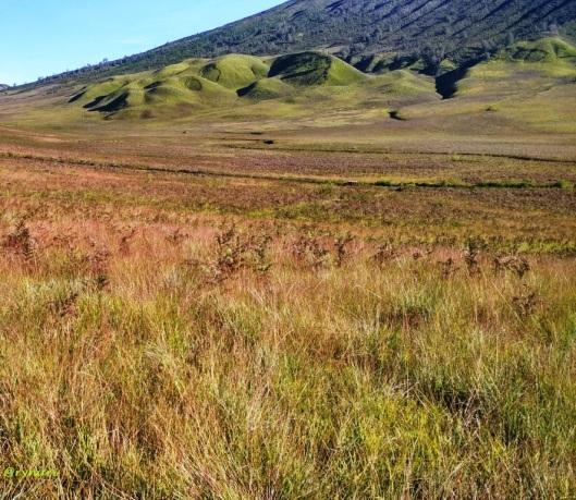 Padang rumput sabana