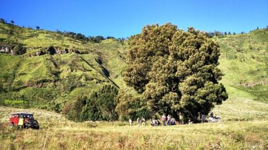 Pohon di Sabana