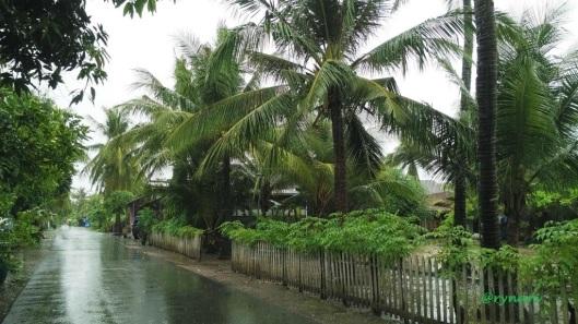 barisan-pohon-kelapa-di-desa-banyutowo-sebagian-kopyor