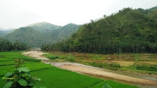 meander-sungai-berkalung-sawah-hijau