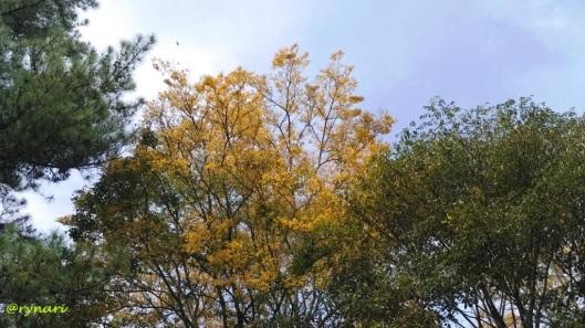 kuning-merona