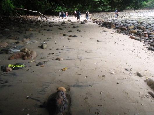 wediombo-kala-pasir-berbaur-dengan-batu-membulat
