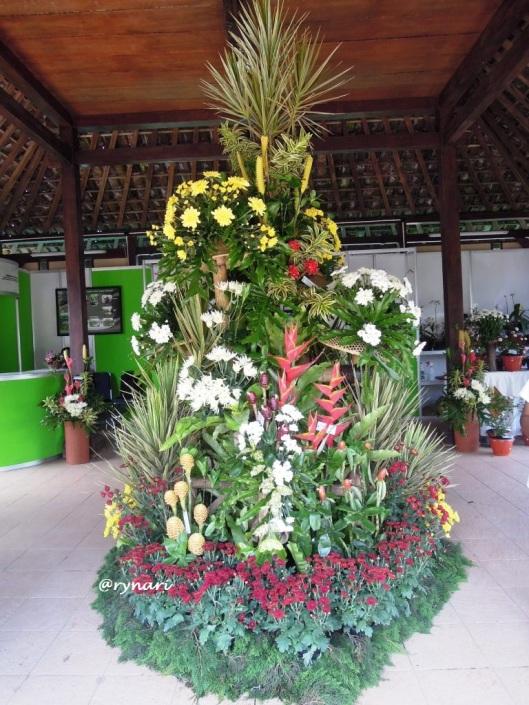 pesona-rangkaian-zingiberaceae