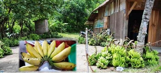 pisang-melimpah-di-desa-bantal